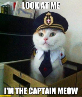 Look at me, I'm the captain meow